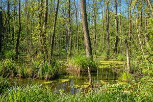 Spaziergang durch den Resser Wald