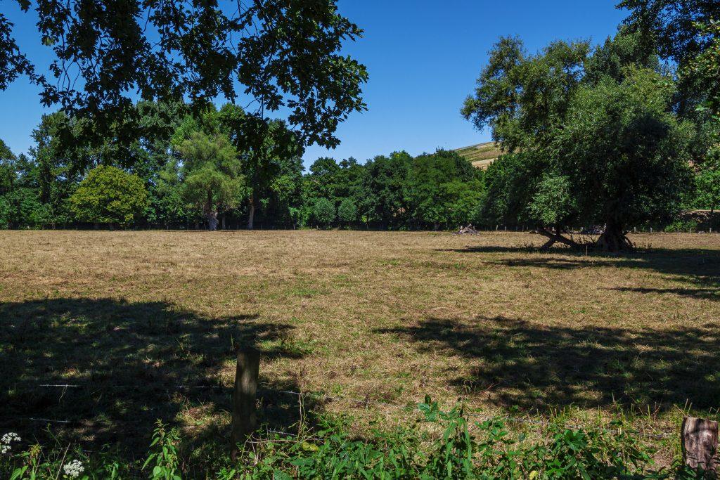 Eine Runde durch das Naturschutzgebiet Emscherbruch